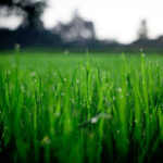 After the Snow Melts, Focus on Your Lawn